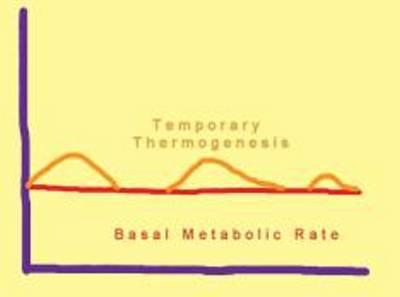 metatolic fitness